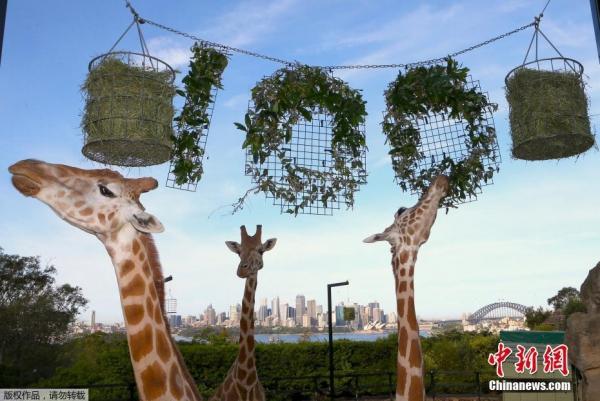 武汉| 悉尼塔隆加动物园举行100周年庆祝仪式 - su.