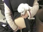 图为:女孩从假肚皮下拿出一只小狗 - 新浪湖北