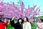 武汉东湖樱花节开幕 赏花期持续到4月20日 - Whtv.Com.Cn