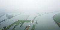 强降雨致湖北阳新富河一堤段出现溃口,淹没周围农田(资料图) 余凯 摄 - 新浪湖北