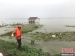 7月20日,巡防人员在武汉市东西湖区东风垸大堤上清理水上漂浮物 张芹 摄 - 新浪湖北