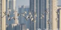 武汉重点区域5月观测到鸟类231种 三种为新发现记录 - 新浪湖北